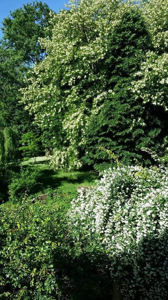 Il giardino di ClassicaViva